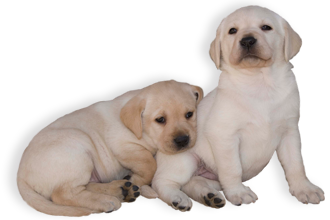 Antiparasitario para perros: Advantix