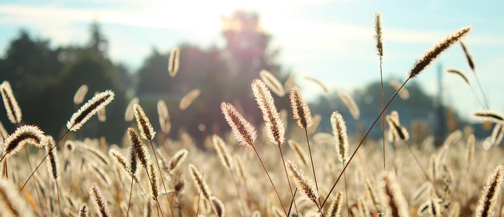 ¿Una primavera sin alergias es posible?